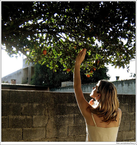 Picture of lady picking fruit